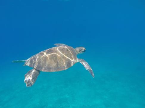 Kalkan bay turtle