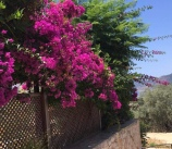 Stunning colours
